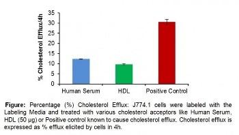 Cell-Based Cholesterol Efflux Fluorometric Assay Kit
