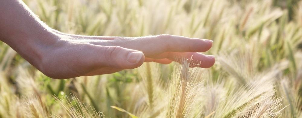 How do fingerprints enhance our sense of touch?