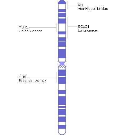 Chromosone 3 contains approximately 1900 genes with approximately 200 million base pairs, of which ~95% have been determined. Image Credit: NIH