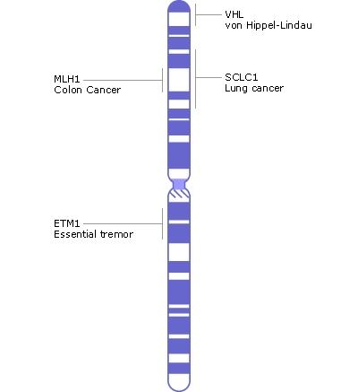 Chromosone 3 contem aproximadamente 1900 genes com aproximadamente 200 milhão pares baixos, de que ~95% foram determinados. Crédito de imagem: NIH