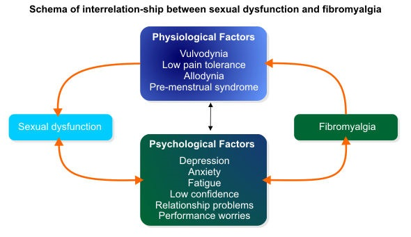 Schema of interrelation-ship between sexual dysfunction and fibromyalgia