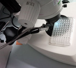 X-taLight 100 - Microscope UV from Molecular Dimensions