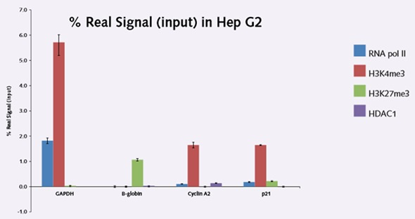 Figure 2. ChIP results in Hep G2 cell line demonstrating the relationship of methylation marks on potentiallytranscribed and silenced gene targets.