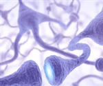 Early-life stress in mice hinders neuron development, causing attention problems