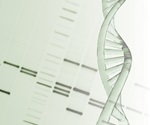 Mitochondrial DNA levels may represent accurate, predictive measure of embryo viability in IVF