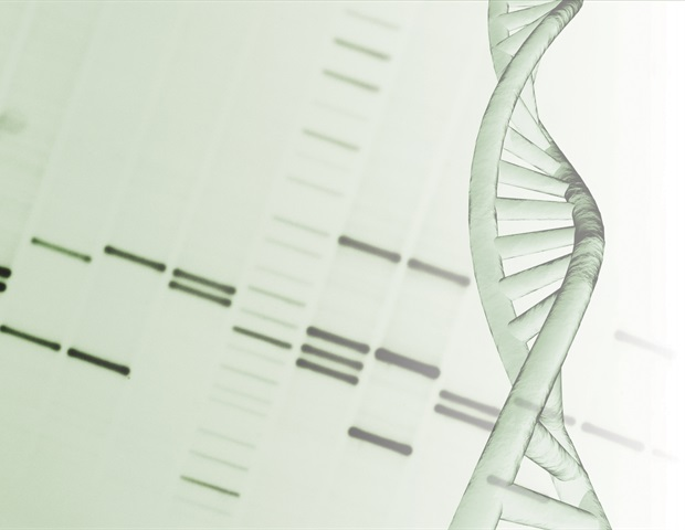 New study unravels complete sequence of DNA repair mechanism – News-Medical.net