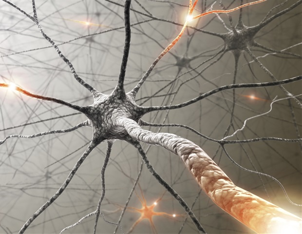 Magnetic nanoparticles guide neurite growth in dopaminergic cells – News-Medical.net