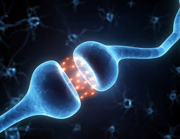 Study discloses molecular mechanism of oligodendrocyte myelination by osteocalcin in the CNS - News-Medical.net