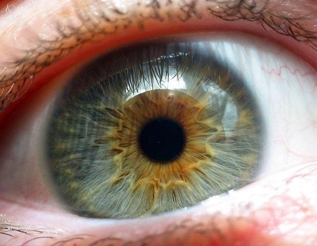 来自人类多能干细胞的新的光感受器恢复了受损视网膜的视力