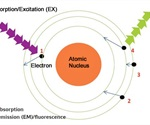 Using Eppendorf BioSpectrometer® Fluorescence for Nucleic Acid Concentration Measurements