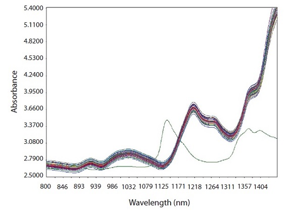 Raw spectra of calibration samples with spectrum of pure CPM