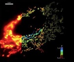 3D Super-Resolution Microscopic Technique for Whole Cell Imaging
