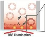Rapid Identification of Single Virus Particles Using Virus Biosensor