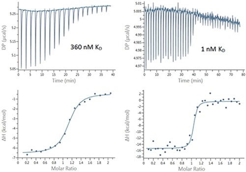 Raw (top) and integrated heat (bottom) plots for the titration of 200 μM Furosemide into 20 μM bCAII (left) using 2 μL injections and 25 μM ethoxzolamide into 2.5 μM bCAII (right) using 1 μL injections.