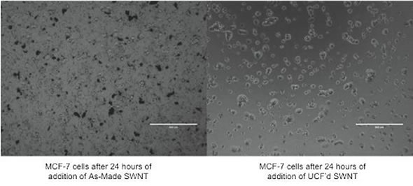Cell Imaging. MCF-7 cells were imaged under an optical microscope after 24 hours of incubation with SWCNT. The cells, incubated with either 0.06 mg/mL As-Made SWNT (left image) or 0.06 mg/mL ultracentrifuged SWNT (right image), have not yet reached confluence. Black aggregates of SWNT can be seen in the image on the left; these aggregates are difficult to wash away without washing away the cells as well. The aggregates have absorption and fluorescence properties that will skew traditional toxicity assays.