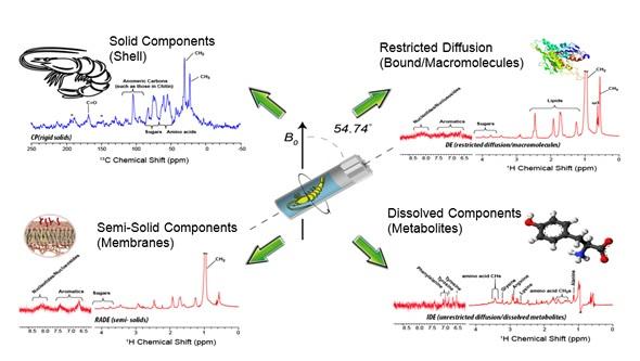 sing CMP-NMR spectroscopy to study Hyalella azteca