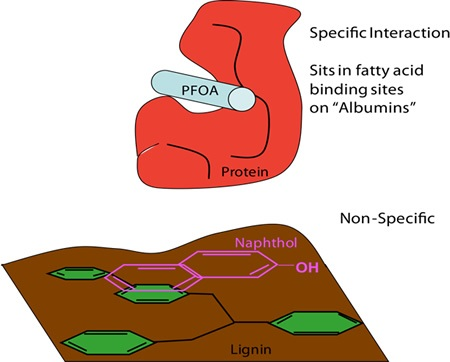 PFOA bind selectively to soil protein, whereas perfluoronaphthol shows preferences for lignin
