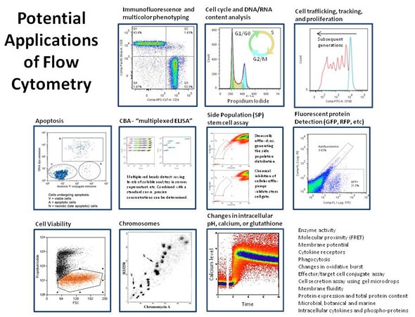 Potential Applications of Flow Cytometry