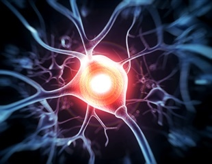 Size of synapses determines the strength of information transmission