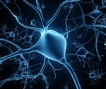 Researchers discover a new way to prevent brain nerve cells from deteriorating after injury