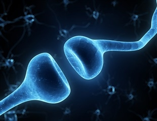 Scientists identify the main components driving amyloid beta-associated synapse degeneration