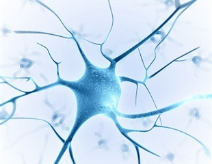 Biodegradable microcapsules loaded with nerve growth factor can guide neuronal development