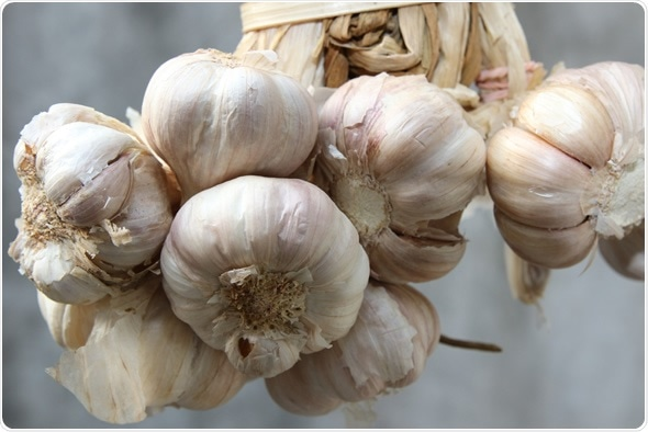 Garlic - Image Copyright: Resul Muslu / Shutterstock