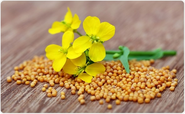 Mustard flowers with seeds on wooden surface