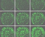 Accurate and Reliable Determination of Growth Status of Cells in Microplate Wells