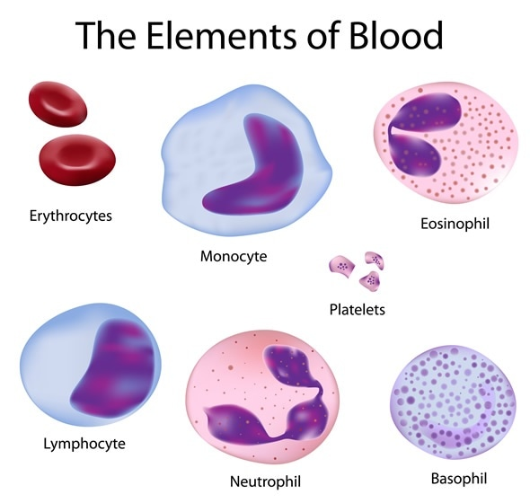 The cells of the blood depicted with accuracy - Image Copyright: Alila Medical Media / Shutterstock