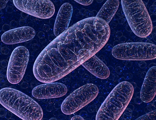 New UCLA-developed device transfers mitochondria into 100000 or more recipient cells – News-Medical.Net