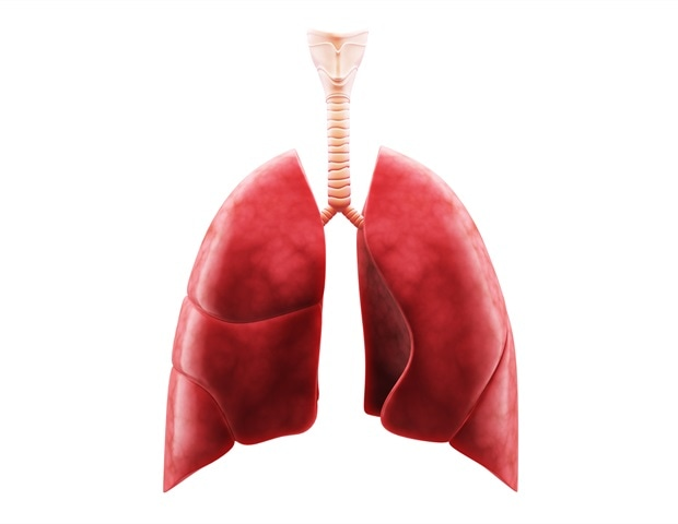 Industrial chemical perfluorobutanoic acid less likely to accumulate in human lungs and kidneys
