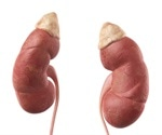 Study points to novel, effective treatment for CKD patients with metabolic acidosis