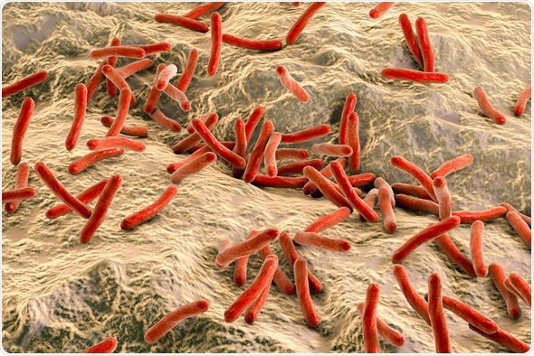 3D illustration - Mycobacterium leprae bacteria inside human body, close-up view. Bacteria which cause leprosy. Image Credit: Kateryna Kon / Shutterstock