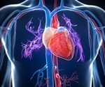 COVID-19 disrupts heart muscle contraction, may lead to heart failure