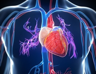 Researchers develop shape memory polymer to understand the development of heart disease