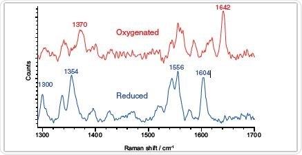 oxygenated and reduced myoglobin