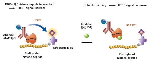 Histone – BRD4 interaction assay principle.