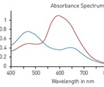 Detection of Standard Absorbance-Based Protein Quantification Assays Using BMG LABTECH Readers