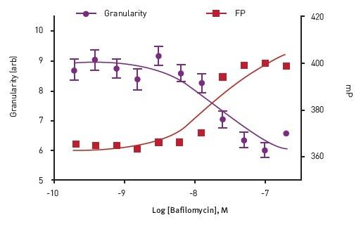 Dose response to Bafilomycin in Insulin Granule Packing Assay. Analysis show an anti-correlation between homoFRETFP signal and mCherry granularity.