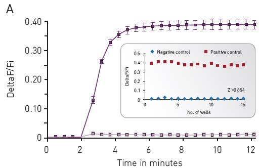 Green-cADDis sensor kinetics for (A) upward sensor and (B) downward sensor in response to isoproterenol Mean +/- std; n = 15 wells. Inset: Gs assay performance in 96-well plate. For (A) Upward sensor Z' factor is 0.854. For (B) downward sensor Z' factor is 0.941.