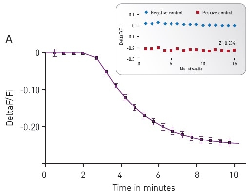 (A) Kinetic measurements of D2 mediated Gi signaling using green—cADDis sensor and the D2 specific agonist Quinpirole. Mean +/- SEM; n = 12 wells. Insert, Gi assay performance in 96-well plate. Z' factor is 0.741. (B) Dose response to Quinpirole. EC50 is 5.7 nM. Mean +/- SEM. n = 6 wells / condition.