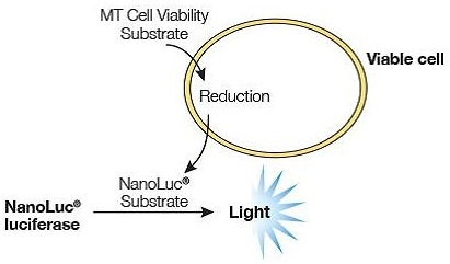 ™RealTime-Glo™ MT Cell Viability Assay