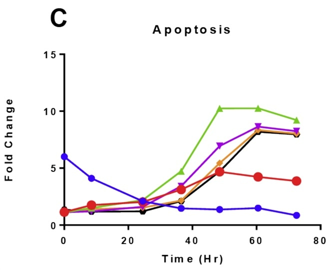 Time and dose-dependent effects on K562 cell health following ponatinib treatment.