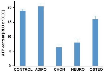 ATP levels during differentiation of stem cells.