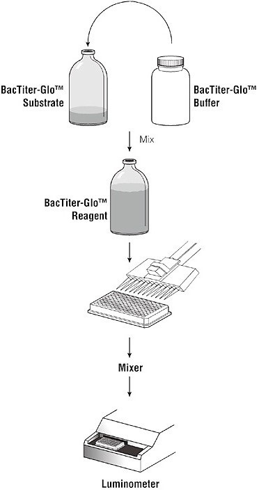 Schematic of the BacTiter-Glo Microbial Cell Viability Assay protocol (1, copied with the permission of Promega Corp.).