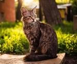 Circassia commences ToleroMune phase 3 trial in cat allergen-induced rhinoconjunctivitis