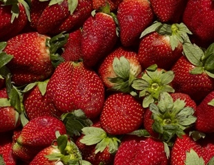 Bioactive packaging can keep strawberries fresh for up to 12 days