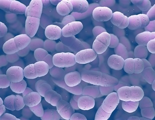 Researchers reveal how pneumonia-causing bacteria obtain essential nutrient from our bodies