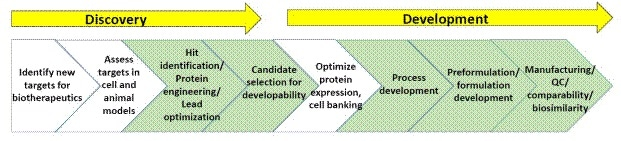 General schematic of processes within biopharmaceutical discovery and development